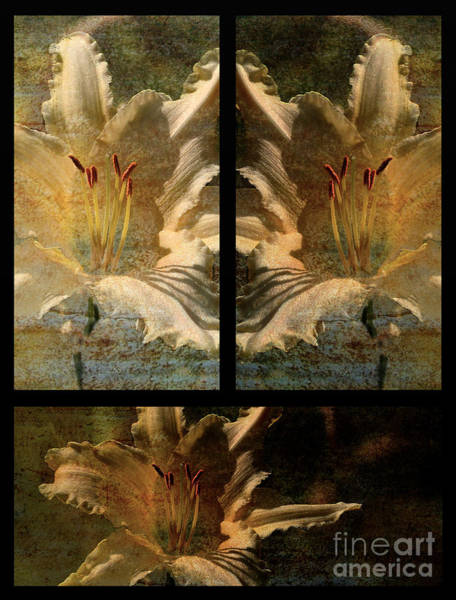 Photograph - Lily Collage by Lois Bryan