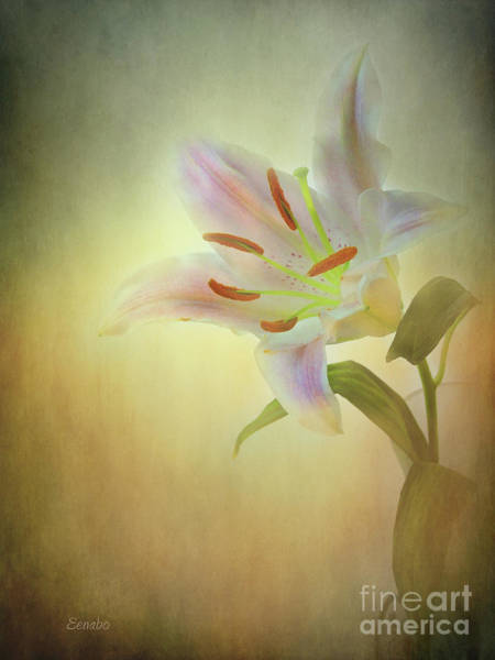 Photograph - Lily by Eena Bo