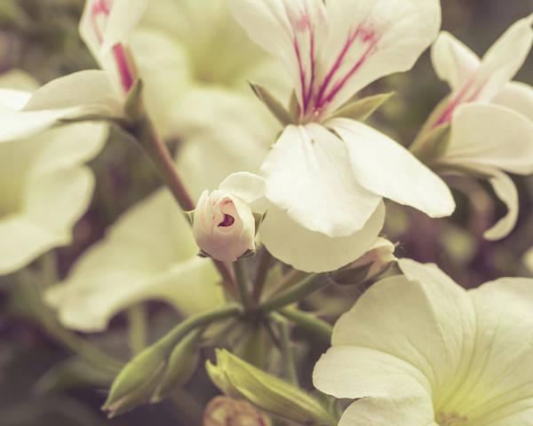 Photograph - Lily Family Flowers A by Jacek Wojnarowski