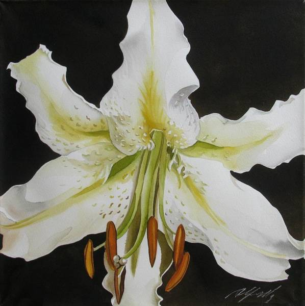 Painting - lily in White by Alfred Ng