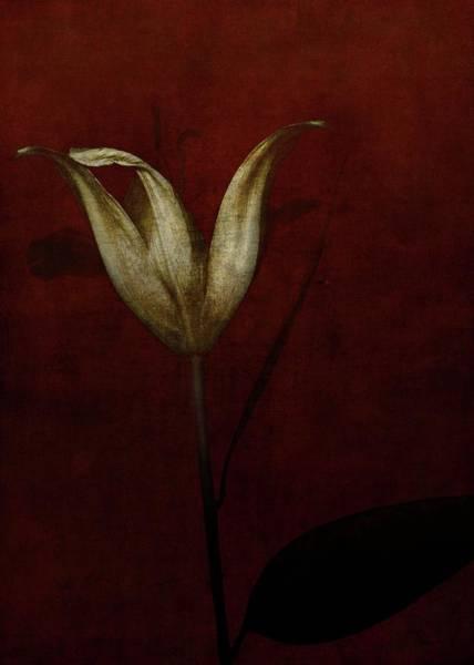 Darkness Painting - Lily by Johan Lilja