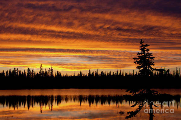 Photograph - Lily Lake Twilight by Katie LaSalle-Lowery