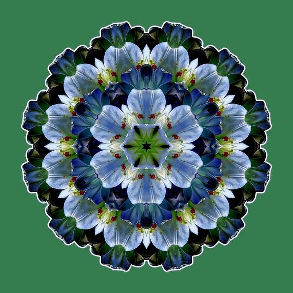 Digital Art - Lily Medallion by Lynde Young