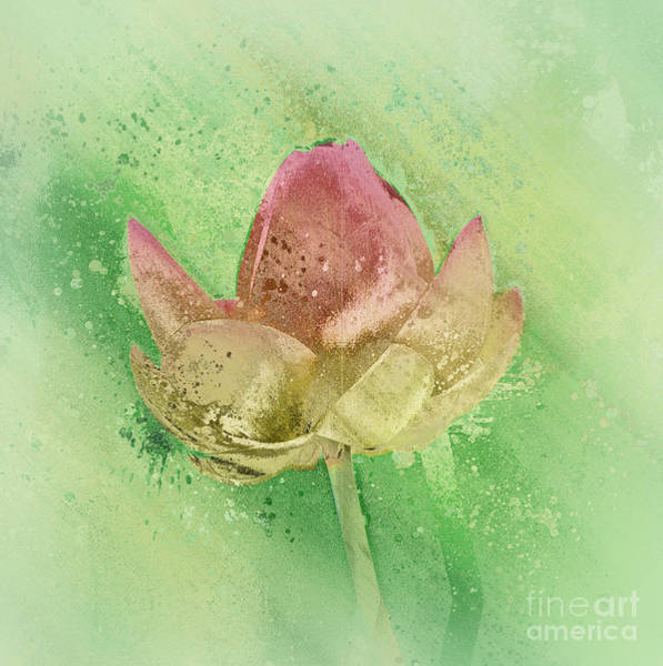 Wall Art - Mixed Media - Lily My Lovely - S112sqc88 by Variance Collections