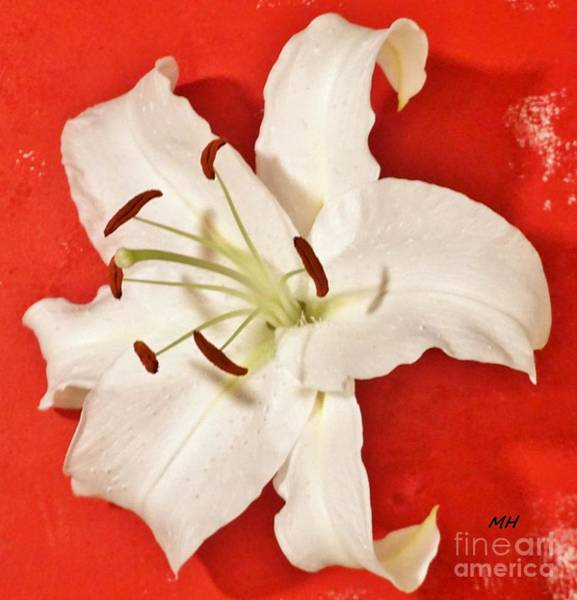 Wall Art - Photograph - Lily On Red by Marsha Heiken