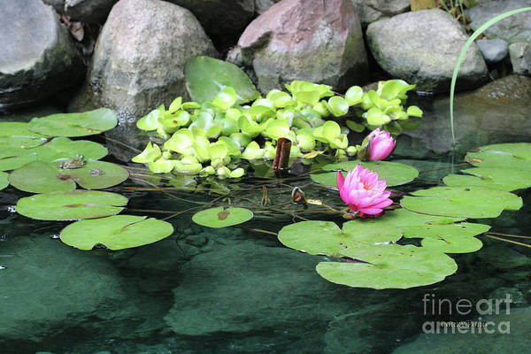 Pistil Painting - Lily Pad Pond by Corey Ford