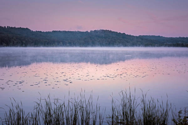 Lavender Mist Wall Art - Photograph - Lily Pad Sunrise by SharaLee Art