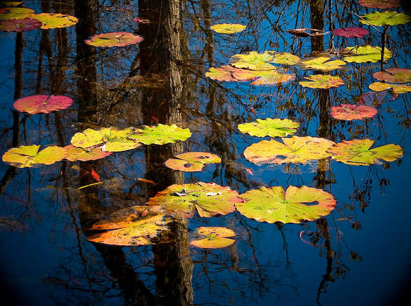 Photograph - Lily Pads by Louis Dallara