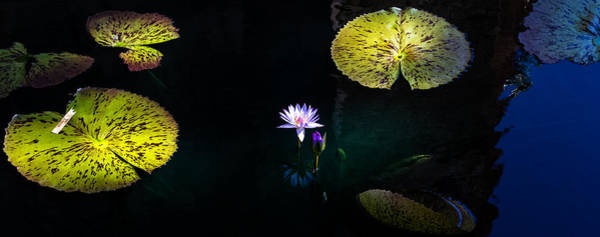 Photograph - Lily Pads by Mike Dunn