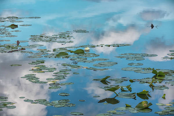 Photograph - Lily Pads On Clouds by John M Bailey
