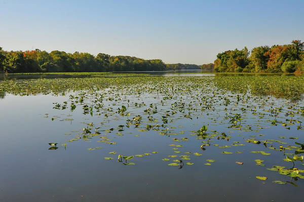 Wall Art - Photograph - Lily Pads On Van Sciver Lake Bucks County Pa by Bill Cannon