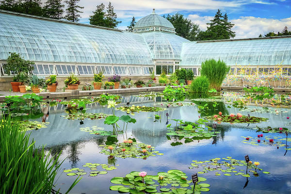 Wall Art - Photograph - Lily Pond by June Marie Sobrito