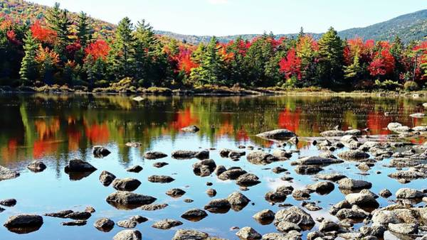 Photograph - Lily Pond - Kancamagus Highway - New Hampshire by Joseph Hendrix