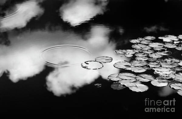 Water Lillies Photograph - Lily Pond by Tim Gainey