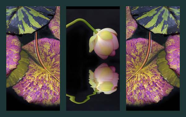 Photograph - Lily Pond Triptych by Jessica Jenney