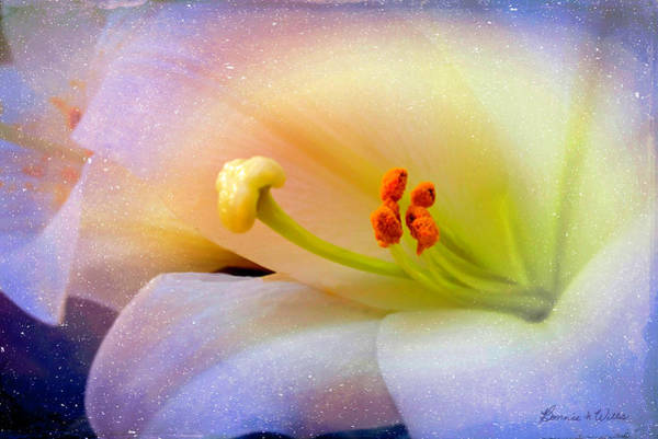 Digital Art - Lily Show by Bonnie Willis