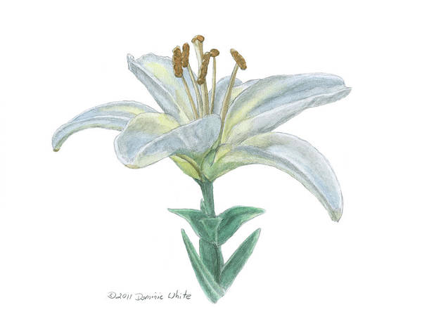 Painting - Lily Watercolor by Dominic White