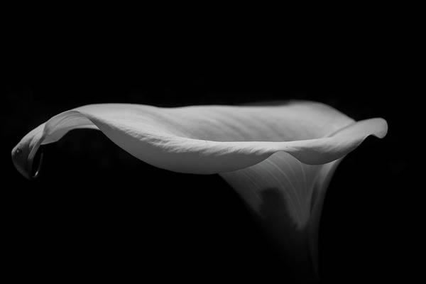 Lilies Wall Art - Photograph - Lily2 by Iain Fielding