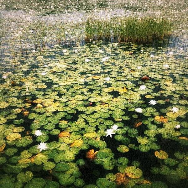 Photograph - #lilypads by Tricia Elliott