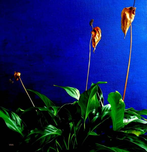 Photograph - Lily's Progress - Finale by VIVA Anderson