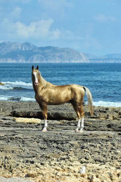 Wall Art - Photograph - Golden Horse by Artur Baboev