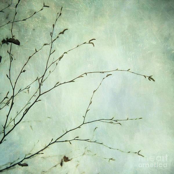 Wall Art - Photograph - Limbs Of A Tree 4 by Priska Wettstein