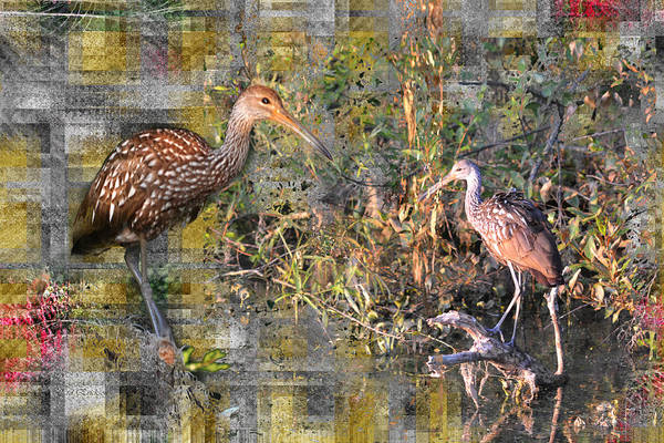 Digital Art - Limpkins In Abstract by rd Erickson