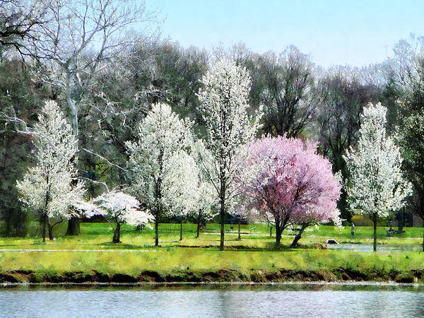 Photograph - Line Of Flowering Trees by Susan Savad