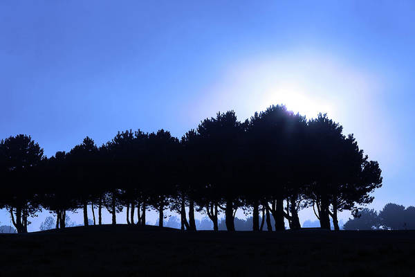 Photograph - Line Of Trees In Landscape by Aidan Moran