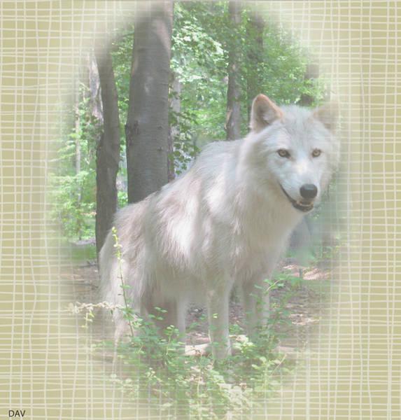 Linen Wolf Pose Art Print by Debra     Vatalaro
