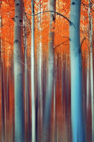 Lines Of Autumn Art Print