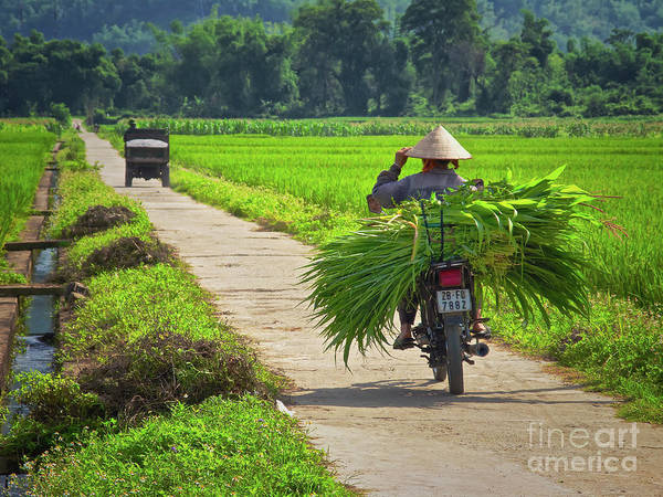Photograph - Lingering Around Mai Chau, Vietnam, Southeast Asia by Sam Antonio Photography