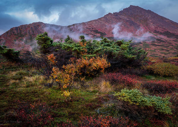 Photograph - Lingering Autumn Reds by Tim Newton