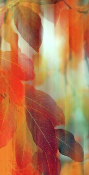 Photograph - Lingering Leaves by Jessica Jenney