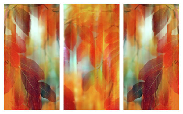 Photograph - Lingering Leaves Triptych by Jessica Jenney