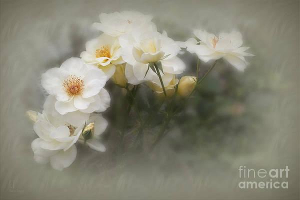 Photograph - Linnea by Elaine Teague