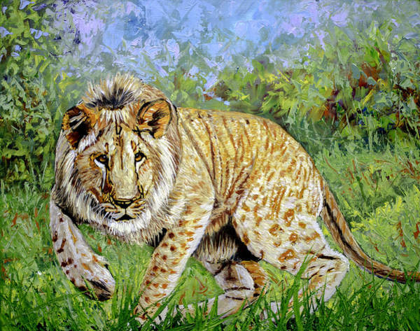 African Tiger Wall Art - Painting - Lion 16x20x1 Inch Oil On Gallery Canvas by Manuel Lopez