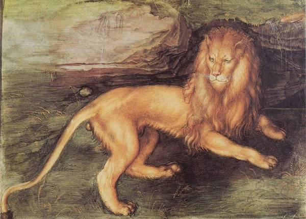 Painting - Lion by Albrecht Durer