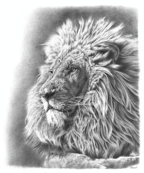 Big Cat Wall Art - Drawing - Lion King by Remrov