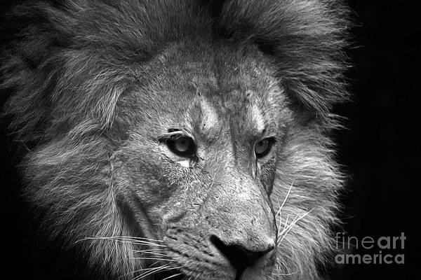 Photograph - Lion Face  by Patti Whitten