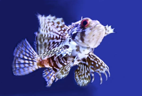 Ugly Photograph - Lion Fish by Art Spectrum