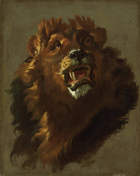 Mountain Lion Painting - Lion by Giuseppe Baldrighi