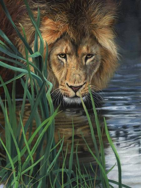 Painting - Lion Grass And Water by David Stribbling