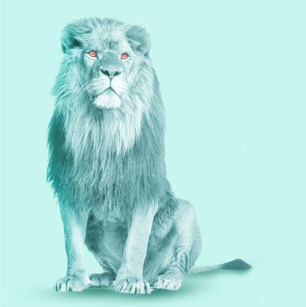 Wall Art - Digital Art - Lion In Blue  by Mark Ashkenazi