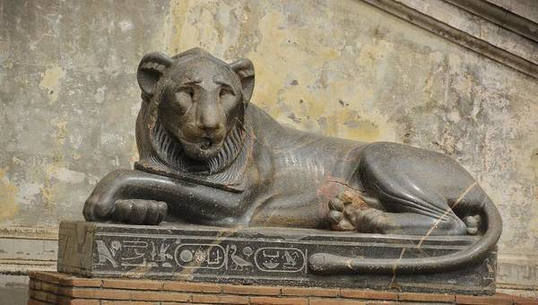 Photograph - Lion In The Courtyard by JAMART Photography