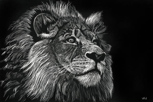 Drawing - Lion Iv by William Underwood