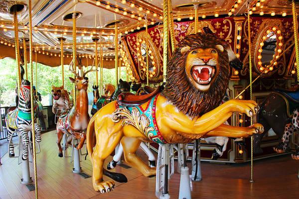 Photograph - Lion King by Carlos Diaz