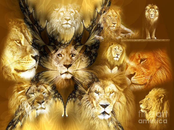 Photograph - Lion King by John Rizzuto