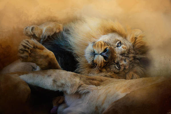 Photograph - Lion Love 2 by Jai Johnson
