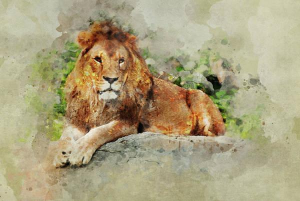 Wall Art - Painting - Lion On The Rocks by Jaroslaw Blaminsky